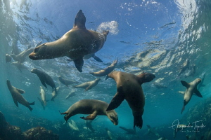 Sea Lion playing around, Magdalena México by Alejandro Topete