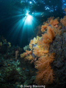 The Passage,where reef meets jungle, awesome light by Joerg Blessing