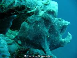 Giant frogfish - Antennarius commerson by Hansruedi Wuersten