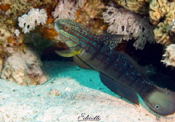 Just a common fish... by Eduard Bello