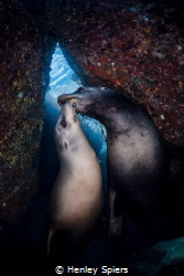 Sea Lion Valentine by Henley Spiers