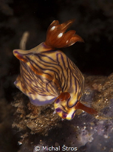 Nudi at Lembeh by Michal Štros