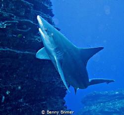 Sand-Shark in Kauai by Benny Brimer