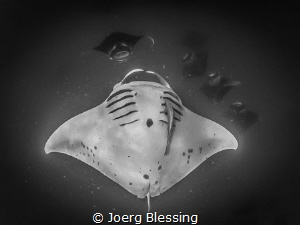 Barrel rolling manta by Joerg Blessing