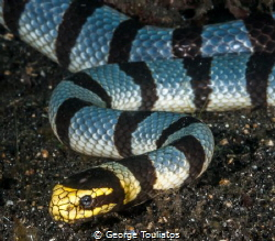 Sea Snake!!! by George Touliatos