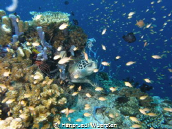 Reef Life by Hansruedi Wuersten