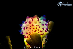 Colourful Nudi in the dark by Chun Zhou