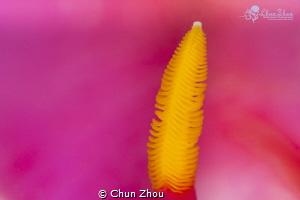 One by Chun Zhou