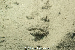 sand covered deadly stonefish by Alberto Pantaleoni