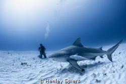 Shark Tourist by Henley Spiers
