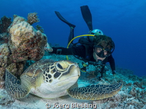 Hanging out with Mr. Green (turtle).. by Joerg Blessing