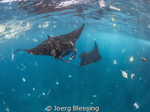 Plastic pollution in our oceans is a serious problem for ... by Joerg Blessing