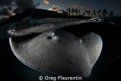 Lagoon with stingray at the sunset by Greg Fleurentin