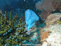 Plastic on the coralls... by Hansruedi Wuersten
