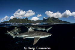 Life under a pacific island by Greg Fleurentin