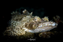 Crocodile fish laying on a big tank at Darawan Island. by Qunyi Zhang