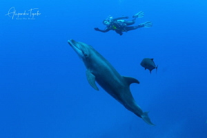 Dolphin with Diver, San Benedicto México by Alejandro Topete