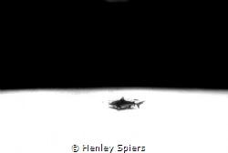 Lone Shark by Henley Spiers