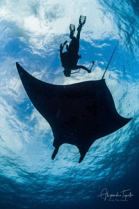 Mantaray with Diver, Roca Partida México by Alejandro Topete