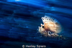 Leaf Fish: Exposed by Henley Spiers