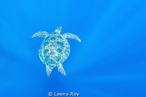 Turtle in the blue by Leena Roy