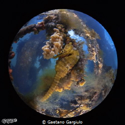 into my ball by Gaetano Gargiulo