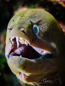 mouth parasite by Marc Van Den Broeck