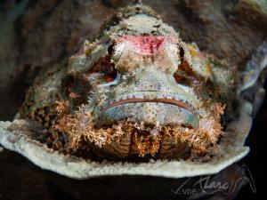 big mouth by Marc Van Den Broeck