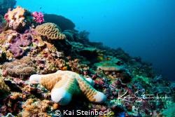 Taken on a drift dive in Nusa Lembongan by Kai Steinbeck
