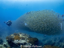 Shoal Fever.. !  Smoothtailed Trevally - Selaroides lep... by Stefan Follows