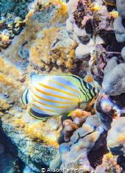 "Snorkeling ""The Dumps"", Maui by Alison Ranheim"