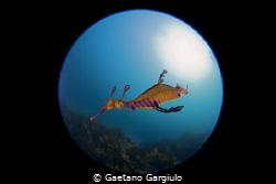 dragon...ball by Gaetano Gargiulo