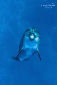Dolphin dance, San Benedicto Island México by Alejandro Topete