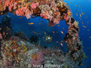 coral window by Joerg Blessing