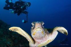 Naughty turtle by Julian Hsu