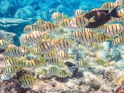 "Snorkeling ""The Dumps"" Maui by Alison Ranheim"