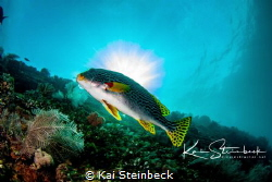 On USAT Liberty wreck in Tulamben Bali by Kai Steinbeck