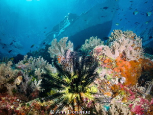 A view of the shallows on a beautiful Wakatoobi reef by Ann Donahue
