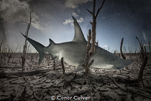 """""""Fading Feeding Grounds"""" This background is an area that ... by Conor Culver"""