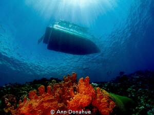 A diver just off the Yap divers boat on top of a reef in ... by Ann Donahue