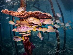 fish poles by Marc Van Den Broeck