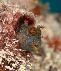 Always a circus 