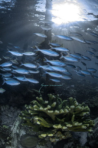 Life under the Sawandarek Jetty by Suzan Meldonian