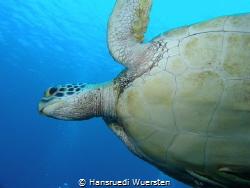 Sea turtle see from down by Hansruedi Wuersten