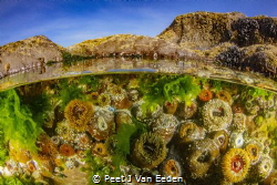 The Tidal Pool by Peet J Van Eeden