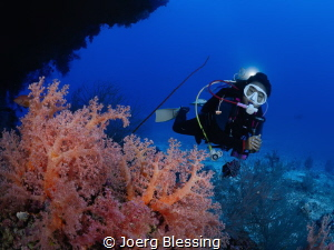 Most shallow hard corals have unfortunately suffered blea... by Joerg Blessing