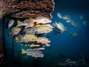 swimming away by Marc Van Den Broeck