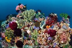 Reefs of Alor (25m deep) by Lars Oliver Michaelis