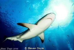 Exuma Cays Bahamas by Steven Doyle