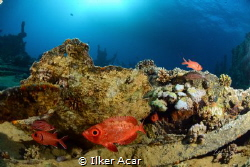 fish n wreck by Ilker Acar